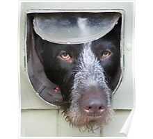 Dog in a Flap Poster