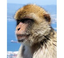 Gibraltar Barbary Ape Photographic Print