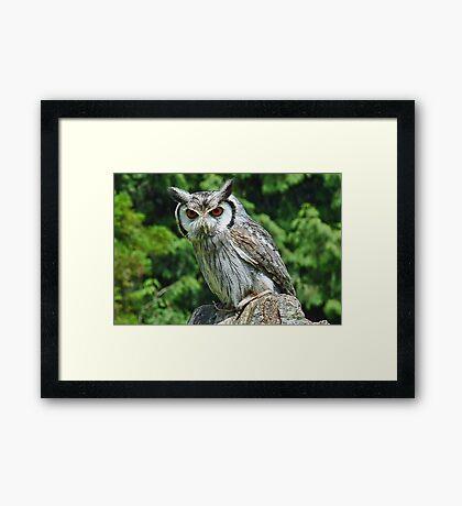 Small Owl  Framed Print