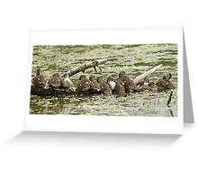 Wood Duck Babes Greeting Card