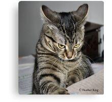Cat Fit Canvas Print