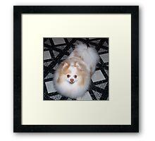 """""""Belle"""" Framed Print"""