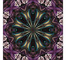 Begonia Photographic Print