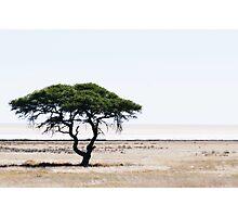 Deserted Tree Photographic Print