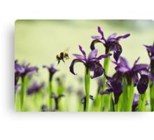 Iris Bee Canvas Print