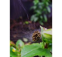 Bunch of Spiders Photographic Print