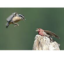 Even Beautiful Songbirds Can Use Mediation Photographic Print