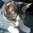 Sophia, Focused on a Bug by heatherfriedman