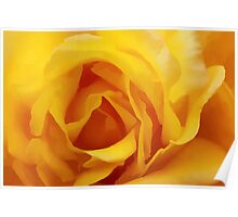 Buttery Soft Rose Poster