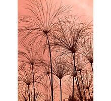 Plant Silhouettes  Photographic Print