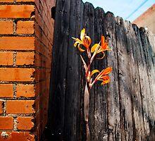 Orange Alleyway by karenfox