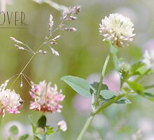 Clover by Elaine  Manley