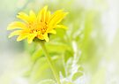 Sunshine on a Cloudy Day by Elaine  Manley