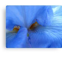 Blue brush off Canvas Print