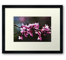 Before My Leaves Arrive Framed Print