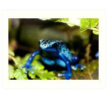 Blue Dart Frog Art Print