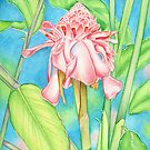 Pink Torch Ginger by joeyartist