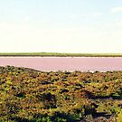Panorama of Pink Lake by Michael John