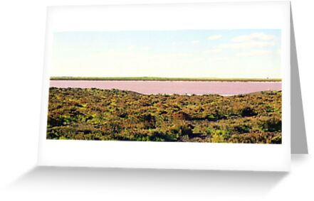 Panorama of Pink Lake by Michael John
