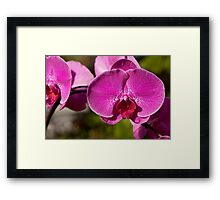 Orchid. Framed Print
