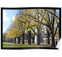 Elm Trees @ University Square Poster
