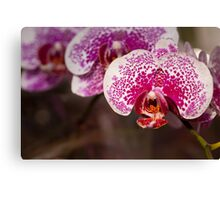 Orchid I Canvas Print