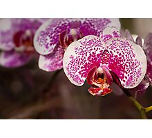 Orchid I Photographic Print