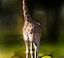 Tall Boy by BoB Davis
