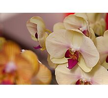 Orchid II Photographic Print