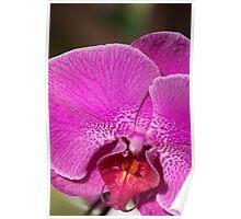 Orchid V Poster