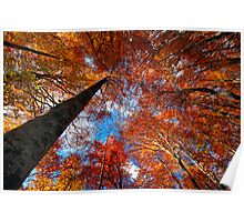Look up through the trees Poster