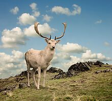 Stag Deer by Binkski