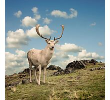 Stag Deer Photographic Print