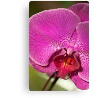 Orchid IX Canvas Print
