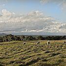 A Winter Landscape - South Australia by JimFilmer