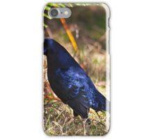 Male Satin Bower Bird iPhone Case/Skin