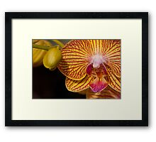 Orchid XII Framed Print