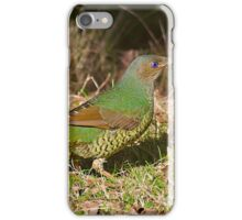 Female Satin Bower Bird iPhone Case/Skin