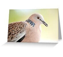 Spotted Turtle Dove Greeting Card
