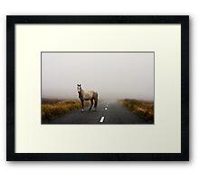 Sallygap horse Framed Print