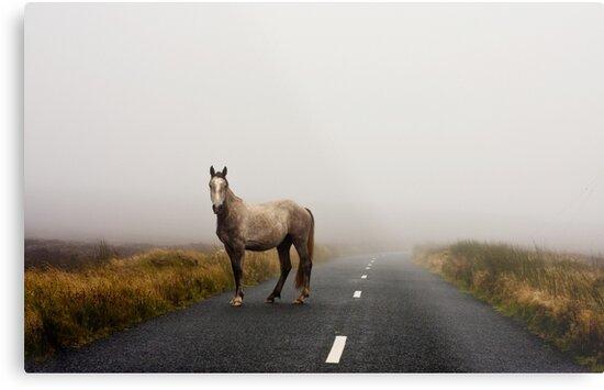 Sallygap horse by DeirdreMarie