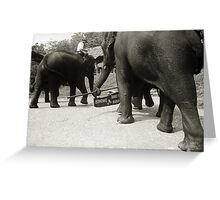 Elephants, Chiangrai Greeting Card