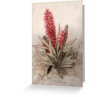 Callistemon Foresterae:  Population 3000 Greeting Card