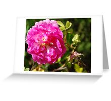 All pretty in pink... Greeting Card