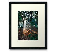 Light Streaming through the trees Framed Print