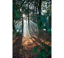 Light Streaming through the trees Photographic Print