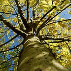 View up a Tree  by Marc Garner