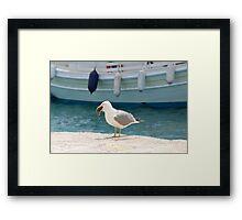 Gull eating a rat, Skiathos Framed Print