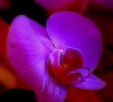 Purple Passion ^ by ctheworld