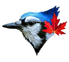 Blue Jays - For Real by Bassanio Jay Gallo
